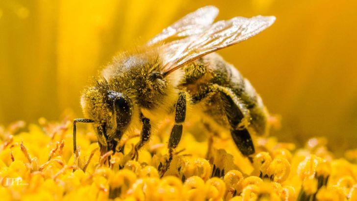 زنبورها قادر به یادآوری چهرۀ افراد هستند