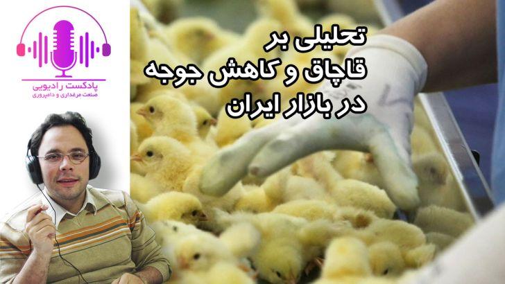تحلیلی بر اخبار قاچاق و کاهش جوجه در بازار ایران