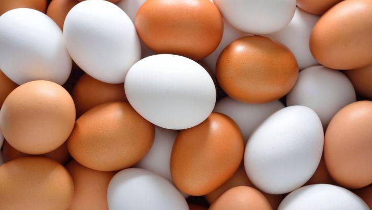 مدرن سازی تجهیزات بازرسی تولیدات تخم مرغ در امریکا