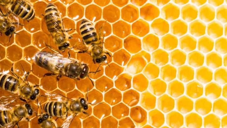 امسال ۱۲ هزار تُن عسل در خوی تولید میشود