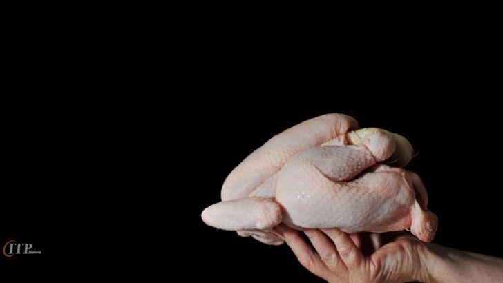 پشتیبانی امور دام به بهانه ذخایر استراتژیک، واردکننده مرغ شده است