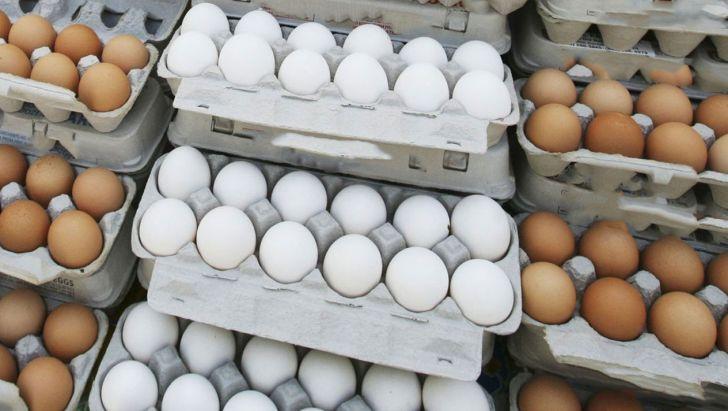 مشکلات بازار تخممرغ در کمیسیون کشاورزی مجلس بررسی شد