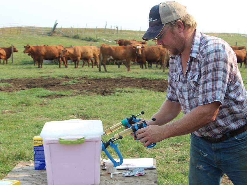 بهترین زمان برای واکسیناسیون گوساله ها