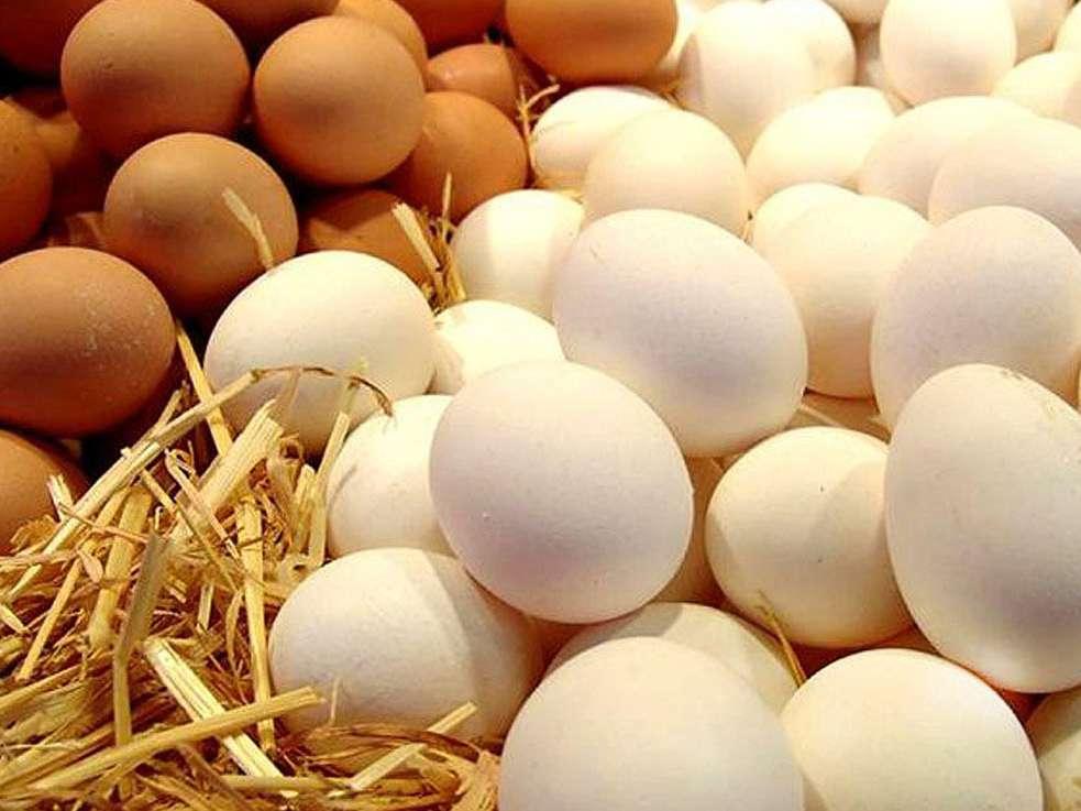 صادرات تخم مرغ به ۵ هزار و ۴۰۰ تن رسید/ قیمت هر کیلو تخم مرغ ۱۵ هزار و ۲۰۰ تومان