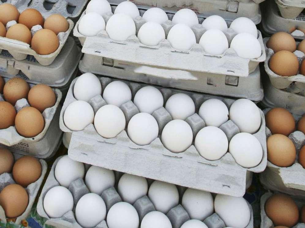 وزارت صمت در خصوص اجازه صادرات تخم مرغ تجدید نظر کند