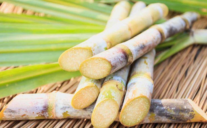 تولید خوراک دام با استفاده از پسماند نیشکر