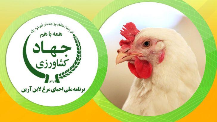 مرغ سویه آرین وارد زنجیره تولید شد