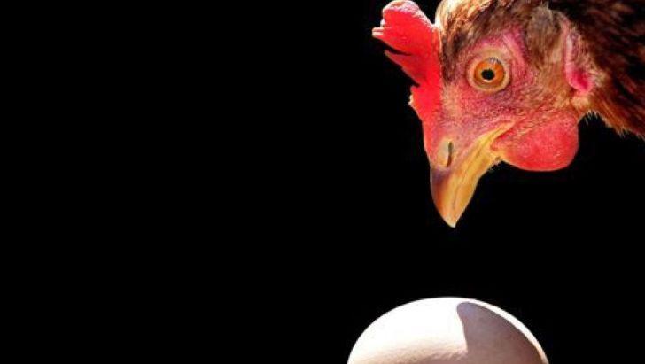 هشدار درباره کاهش تولیدتخم مرغ