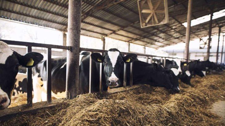 شیوع بیماریهای دامی ناشی از کمبود تغدیه مناسب حیوان است
