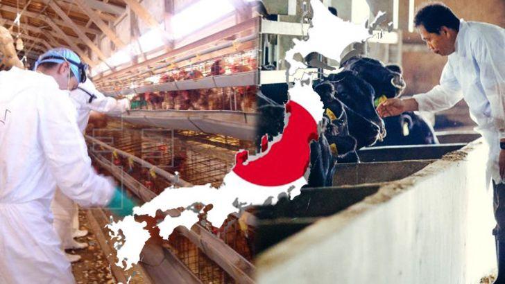 خلاصه ای از برنامه های حمایتی دولت ژاپن از صنعت دام و طیور