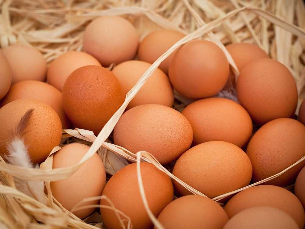 کاهش تولید و افزایش قیمت تخممرغ در بازار مشهد