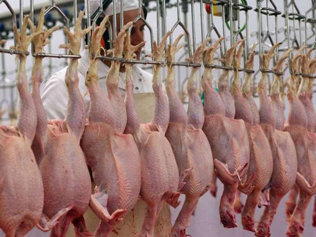 مرغ ها شناسه دار می شوند