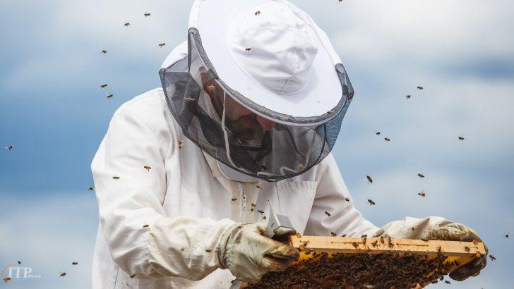زنبورداران از اخذ کد شناسه یکتا و حمل خودرویی مستثنی شوند