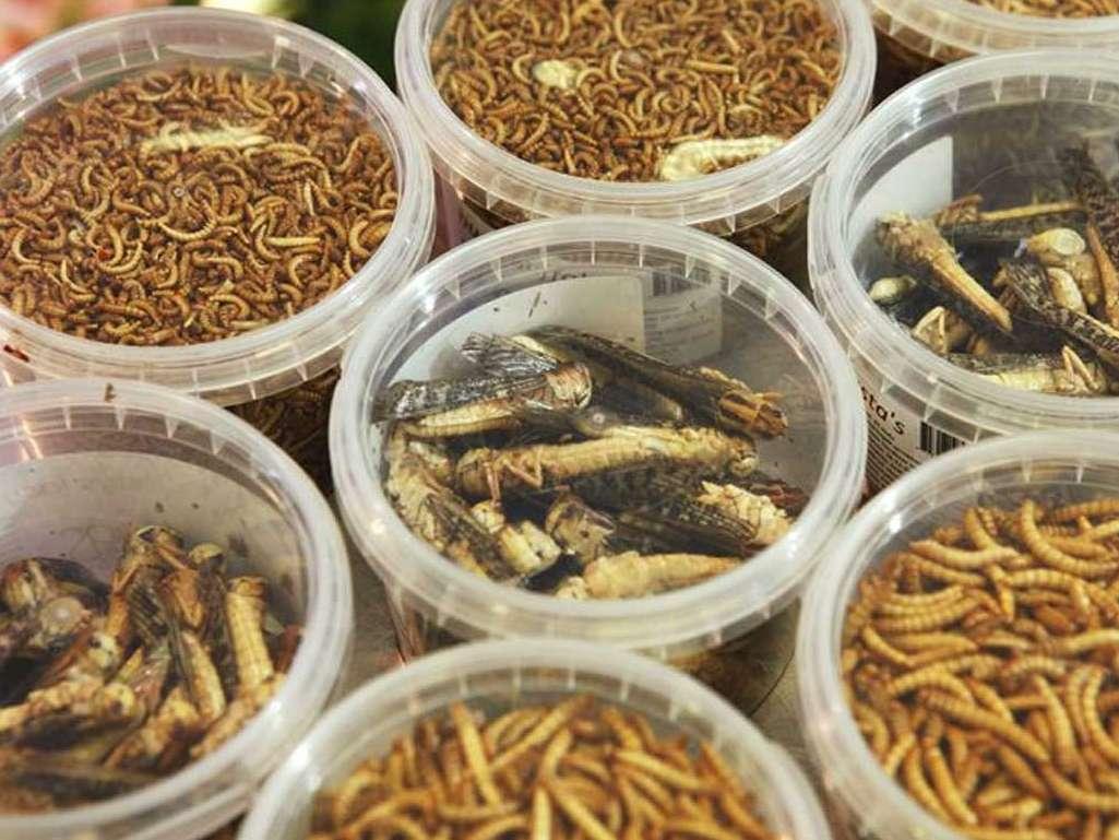 تغذیۀ دام و طیور با حشرات