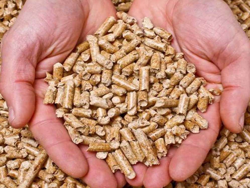خودکفایی در تولید خوراک دام باید جدی گرفته شود