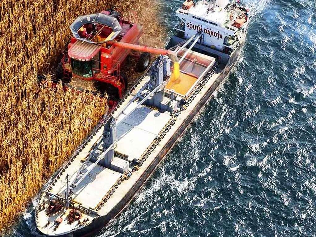 برای واردات نهادههای دامی کشتی نداریم