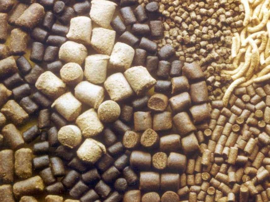 6 ماده مکمل انرژی زا برای خوراک دهی به طیور