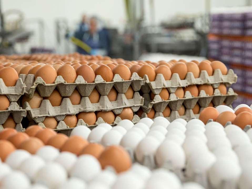 موجودی تخم مرغ وارداتی انبار پشتیبانی امور دام