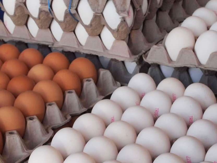 تعرفه واردات تخم مرغ ۵ درصد شد