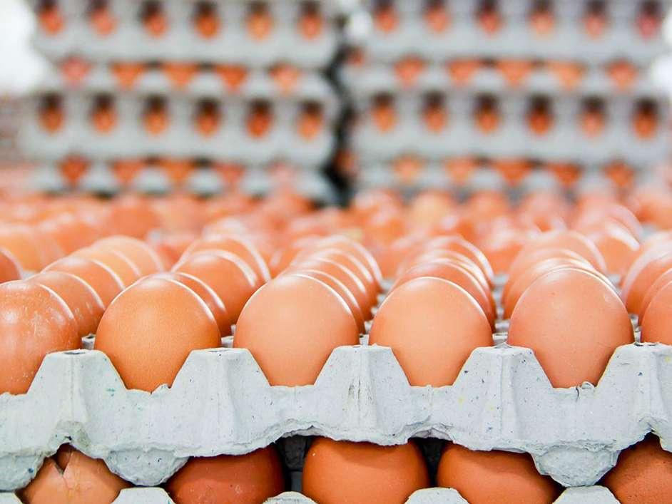 خراسان رضوی ظرفیت افزایش تولید تخم مرغ را دارد