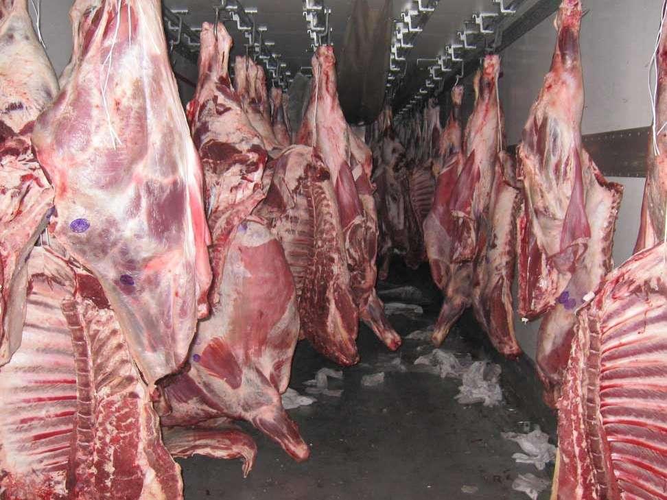 عرضه گوشت دام زنده وارداتی در قصابیها