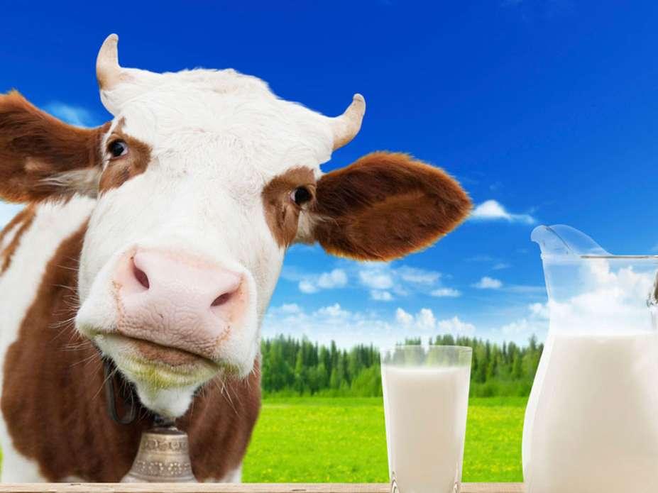 نرخ شیر خام همچنان روی میز آقای وزیر