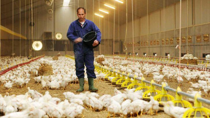 گلایه مرغداران گلستانی از کاهش قیمت مرغ و افزایش نرخ نهادههای دامی
