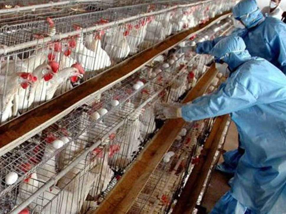 کاهش ۷۰ تا ۸۰ درصدی کانونهای آنفلوآنزا