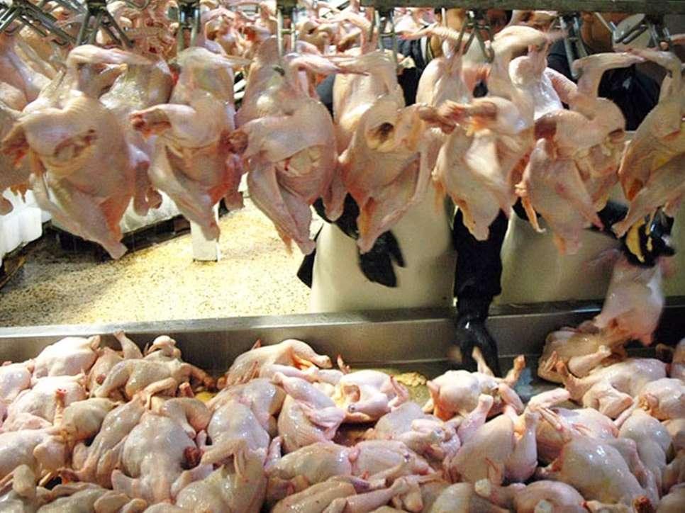 تولید سرانه گوشت مرغ به 26 کیلوگرم رسید