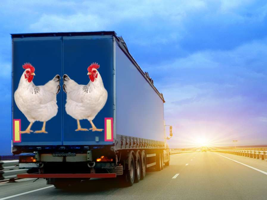 عراق تعرفه مرغ ایرانی را افزایش داد