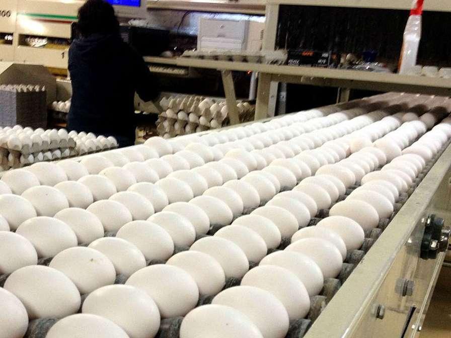 برنامهای برای صادرات تخم مرغ نداریم