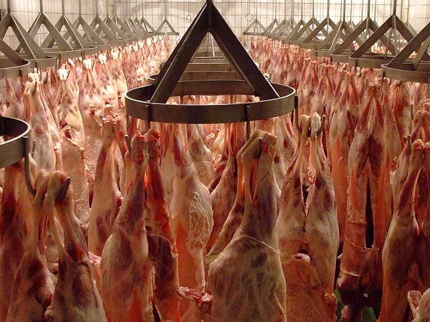 افزایش عرضه گوشت گوسفندی