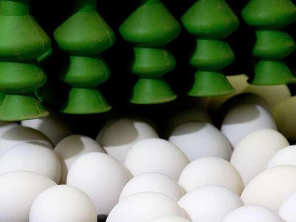 واقعی سازی قیمت تخم مرغ