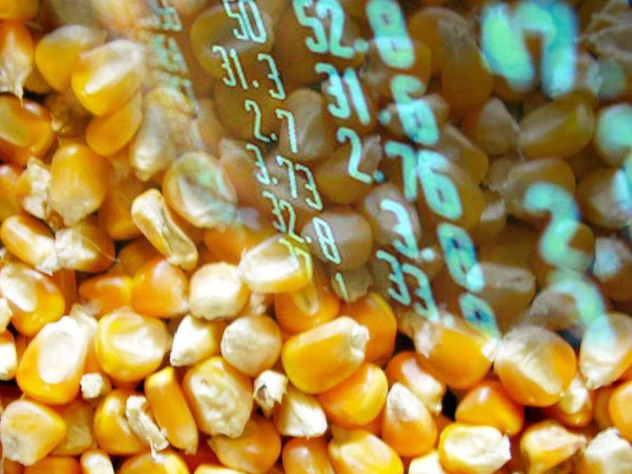 عرضه محصولات ذرت و جو در بورس کالای ایران