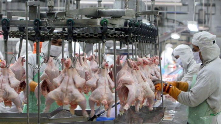 تولید گوشت مرغ در زنجیره های تولید
