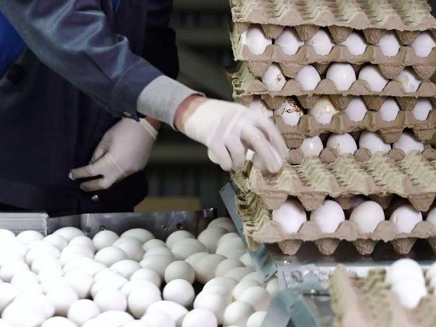 تخم مرغ به نرخ دولتی وارد بازار می شود