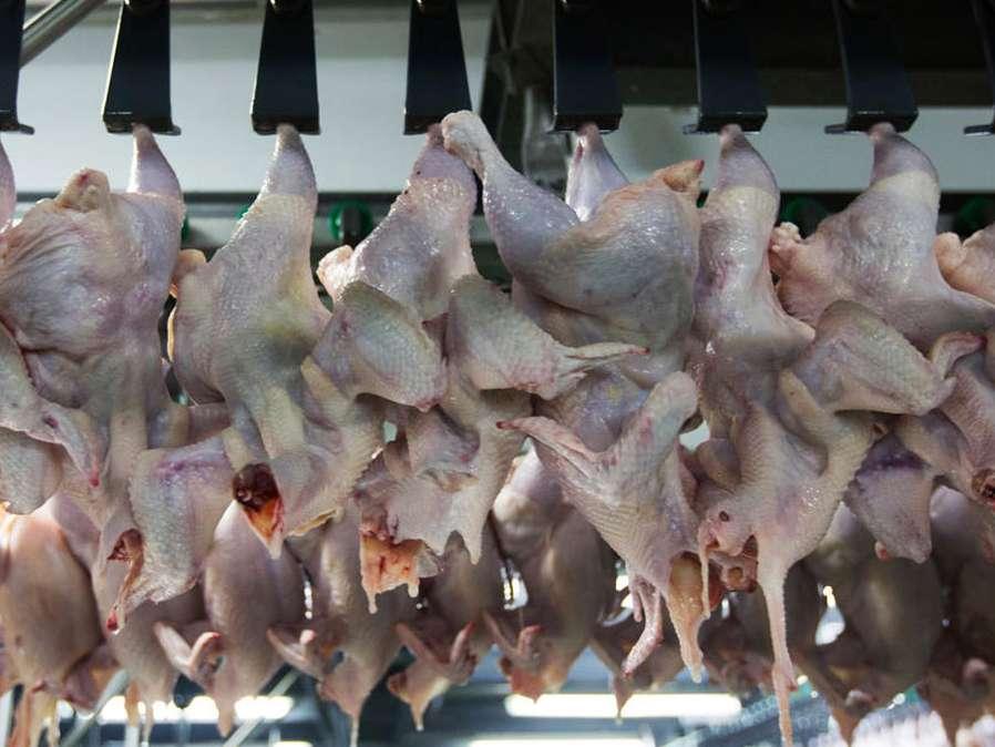 کمبود تولید علت اصلی افزایش قیمت مرغ