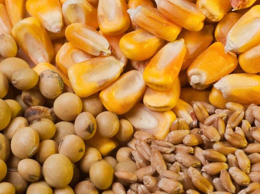 تاثیر افزایش 100 درصدی قیمت نهادهها بر مرغ و تخممرغ