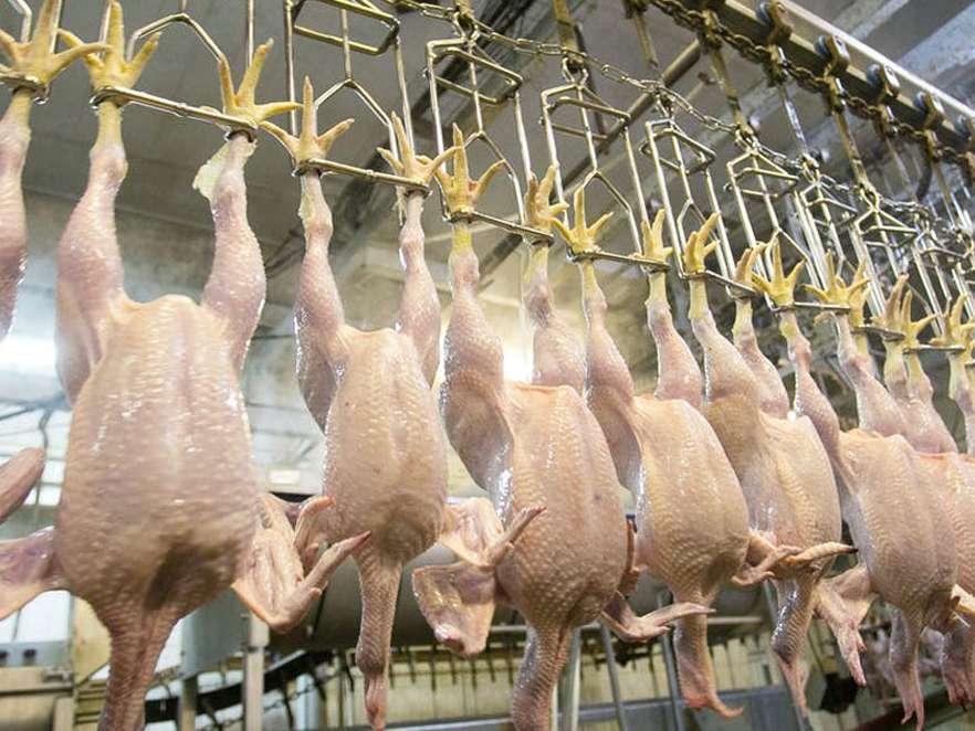 حساسیت به قیمت مرغ خیلی عجیب است
