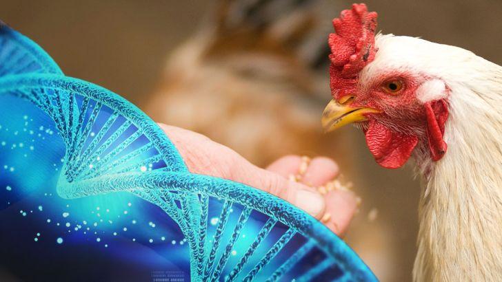 پیشرفت ژنتیکی و نحوه کسب اطلاعات در تبدیل خوراک