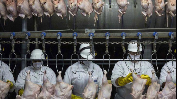 مشکلی در تامین گوشت مرغ نداریم