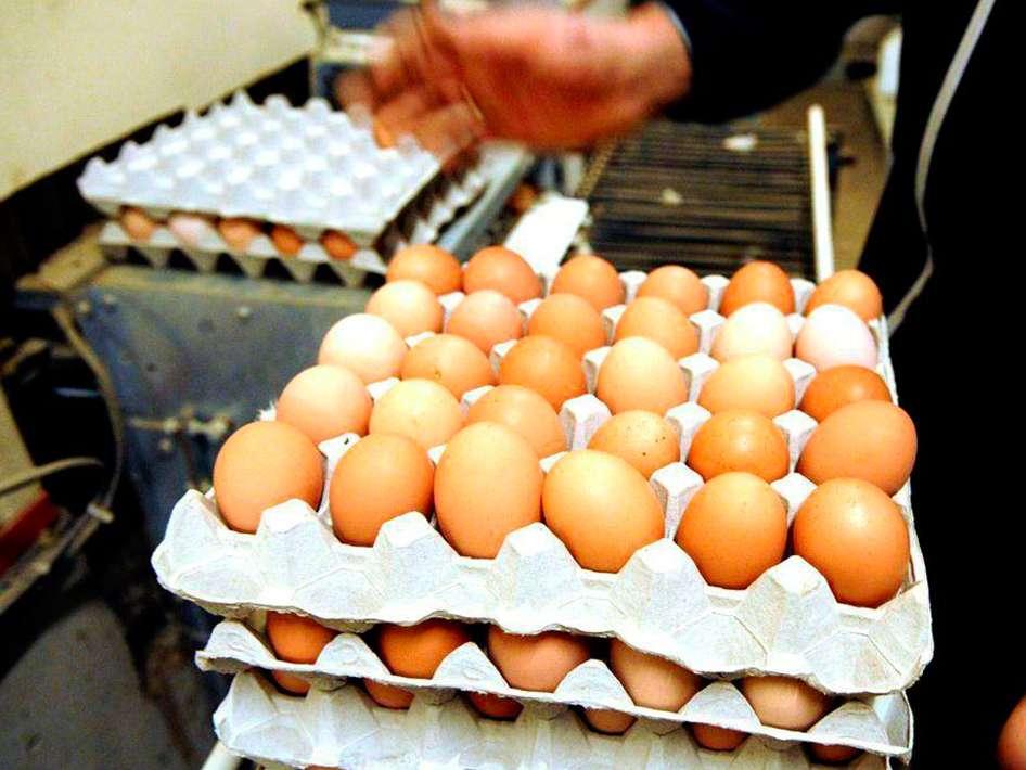 قیمت تخم مرغ در بازار ثابت ماند