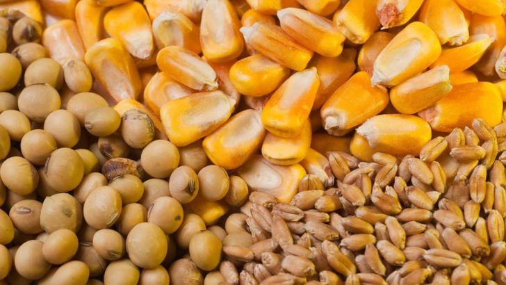 صادرات خوراک دام با نهادههای که ارز دولتی میگیرند