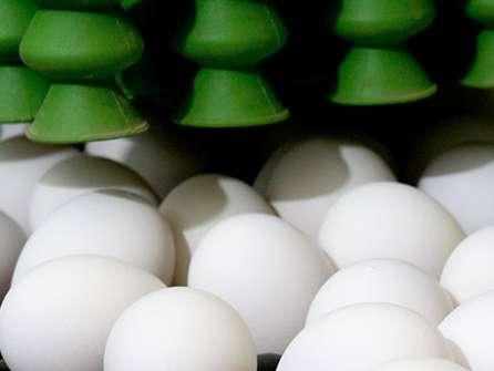 ۱۰ درصد تخم مرغ کشور در آذربایجان شرقی تولید می شود