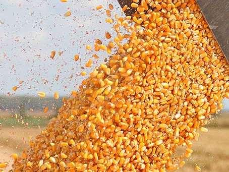 واردات ۲ میلیون و ۱۰۰ هزارتن نهاده دامی به کشور