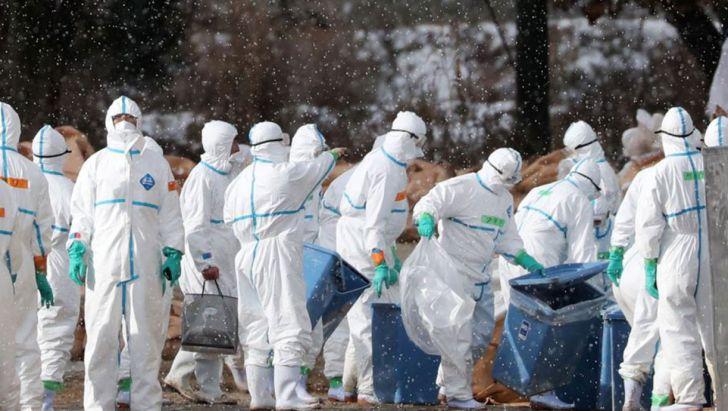 14 گروه پایش آنفلوآنزای پرندگان در استان مرکزی دایر شد