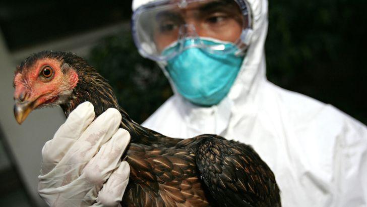 اهمیت اقتصادی و اجتماعی پیشگیری از آنفلوآنزای فوق حاد پرندگان