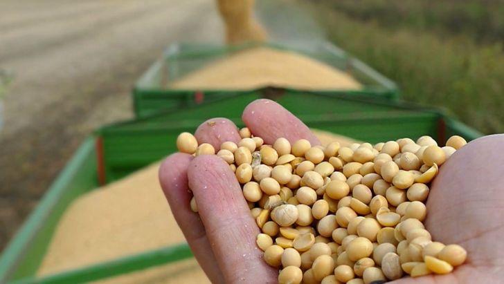 محصول تراریخته تولید داخل در کشور وجود ندارد/ ناچار به واردات سویای تراریخته هستیم