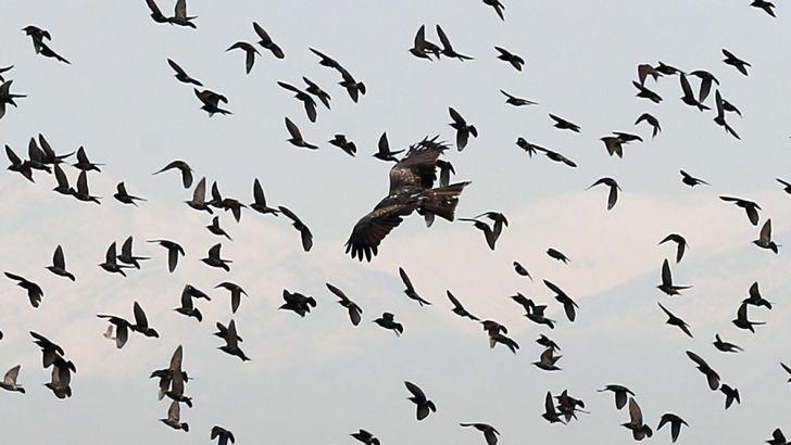 هیچ موردی از آنفلوآنزای پرندگان در ایلام مشاهده نشده است