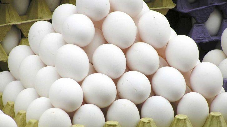 هشت درصد تخم مرغ کشور در قزوین تولید می شود
